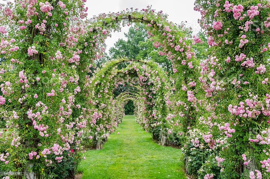 Rose Covered Archways at Elizabeth Park, West Hartford, CT stock photo
