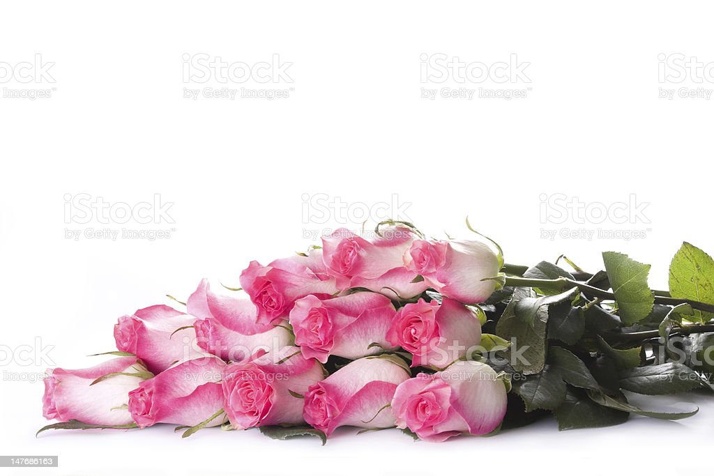 Rose dozen stock photo