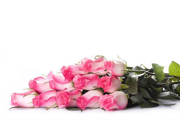 Rose dozen stock photo