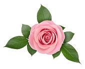 Rose flower arrangement isolated on a white. Clip art image for design.