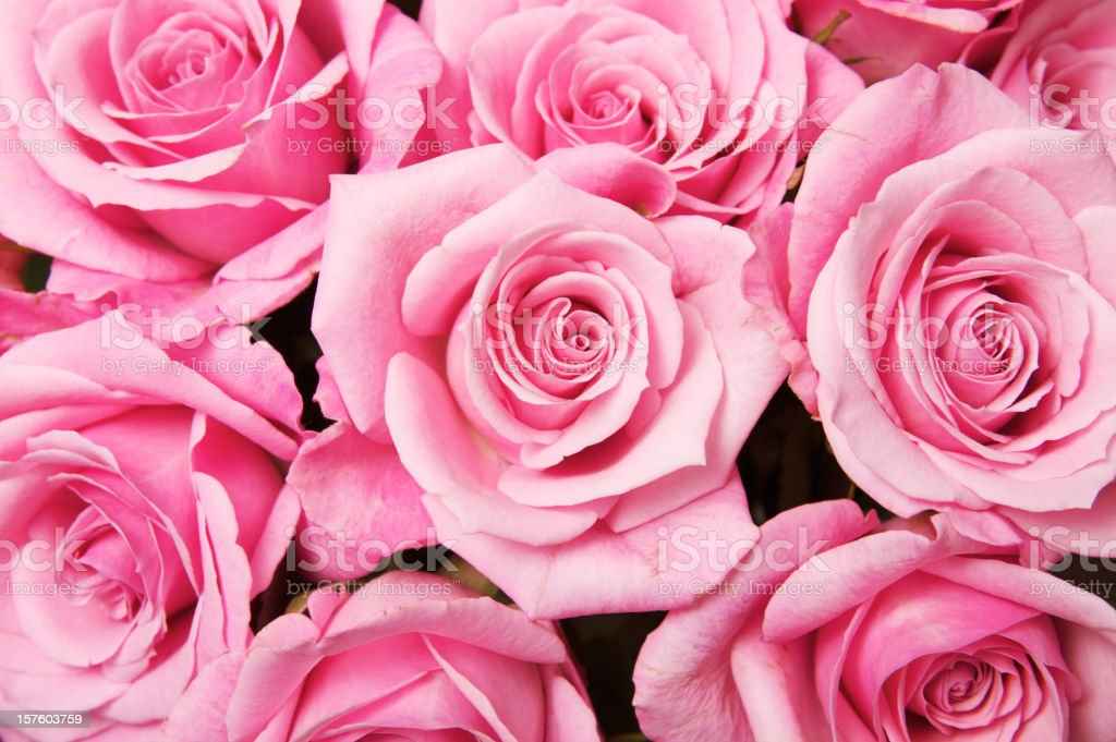 Rose Flower Background stock photo