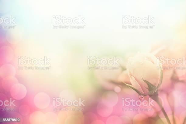 Rose flower background picture id538578810?b=1&k=6&m=538578810&s=612x612&h=62wugyn8e9jjuhkfwg59vhppp8stlpvwzjkgihuplei=