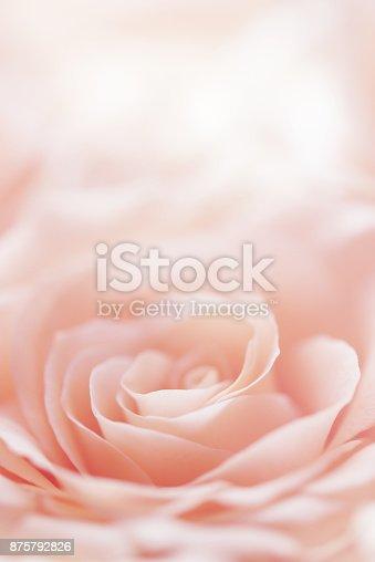 rose flwer background