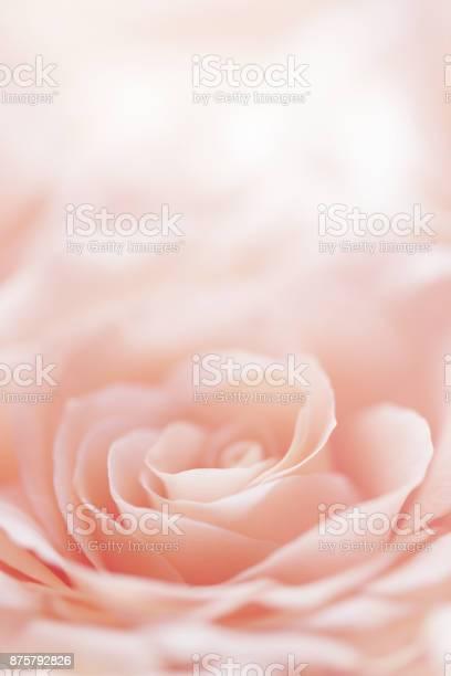 Rose flower background picture id875792826?b=1&k=6&m=875792826&s=612x612&h=xmtmkjnuixnud o0npznaoatl3aniud1xbr6chbhuxk=