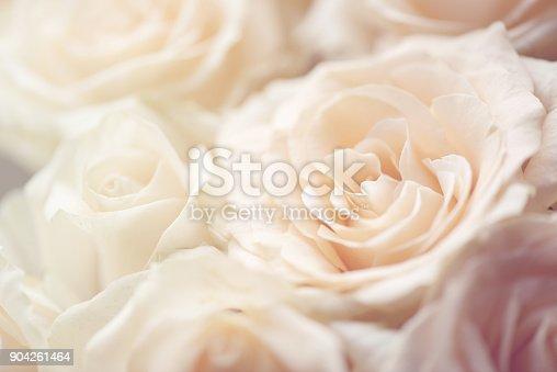istock rose flower background 904261464
