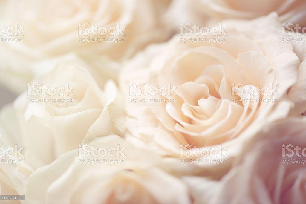 rose Blume Hintergrund – Foto