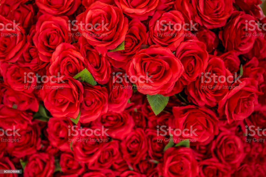Rose - Flower, Flower, Valentine's Day - Holiday, Backgrounds, Red stock photo
