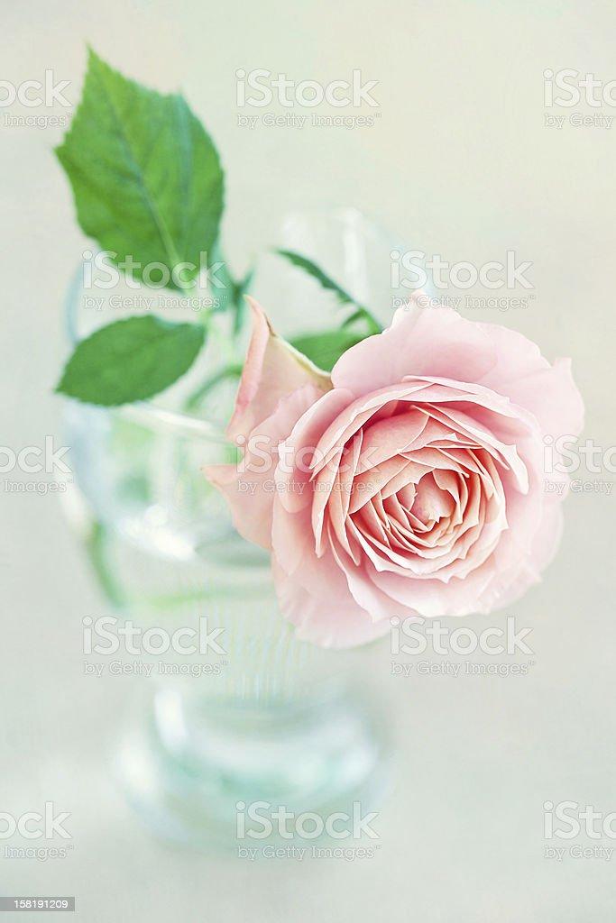 rose-flower Lizenzfreies stock-foto