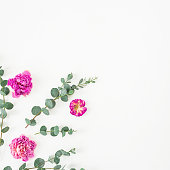 istock Rose flowers and eucalyptus branches on white background. Flat lay, top view. Valentine's background. 835856696
