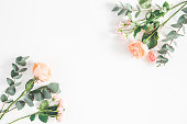 istock Rose flowers and eucalyptus branches on white background 972523218
