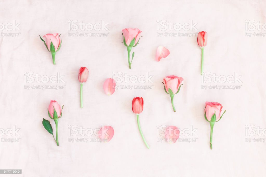 Rose flowers and tulip on pink background. Flat lay, top view