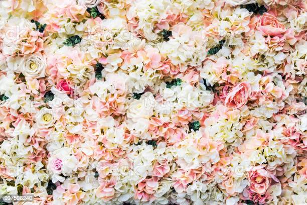 Rose flowers are white and pink picture id997596240?b=1&k=6&m=997596240&s=612x612&h=ihh2a3cz9pda9pku7qvvn2tnznkqs0k z0dtw8di1be=