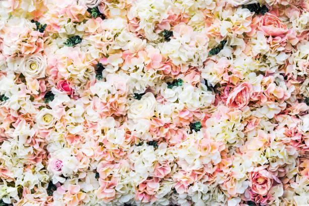 Rose-Blumen sind weiß und Rosa – Foto