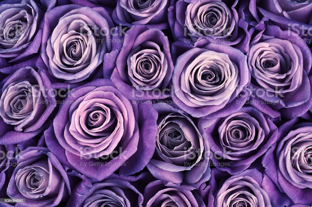 Rose flowers background