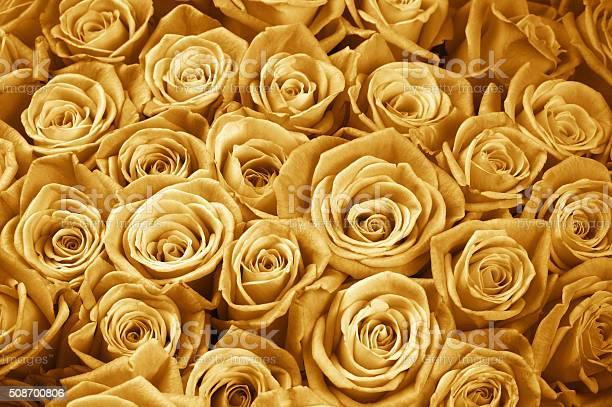 Rose flowers background picture id508700806?b=1&k=6&m=508700806&s=612x612&h=mipwt9ds6bpvfagqddl6bn3g2xvdoprjctrs56qgbsg=