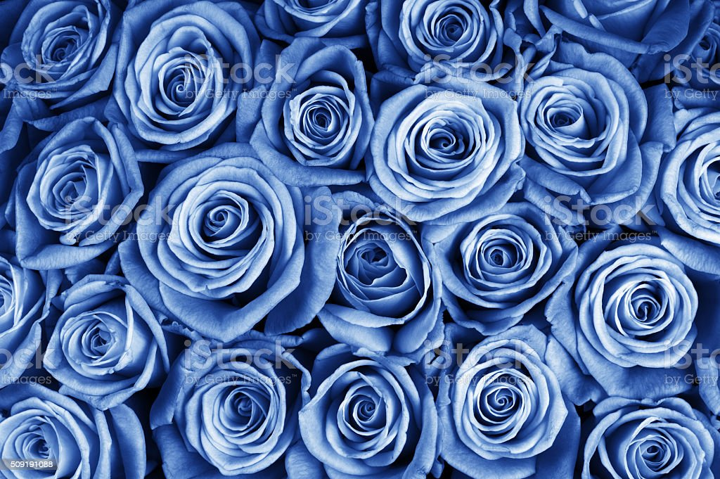 Rose flowers background stock photo