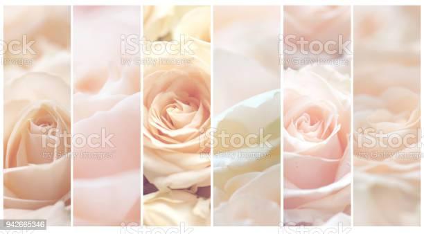Rose flowers conceptual collage picture id942665346?b=1&k=6&m=942665346&s=612x612&h=ouh6xrtwwxgn rpia6k04vhp 3fyuwtnh9etacmlooi=