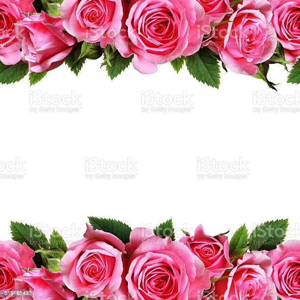 Rose flowers dorders picture id519165492?b=1&k=6&m=519165492&s=612x612&h=4tyjeabux3ntzs3vmkewz887xdyulnmegckspbfdiqo=