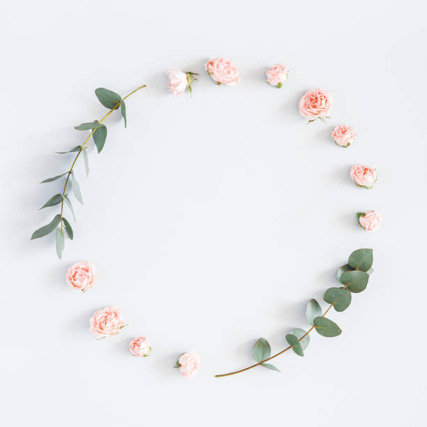 Rosen-Blumen, Zweige Eukalyptus. Flach legen, Top Aussicht, Textfreiraum – Foto