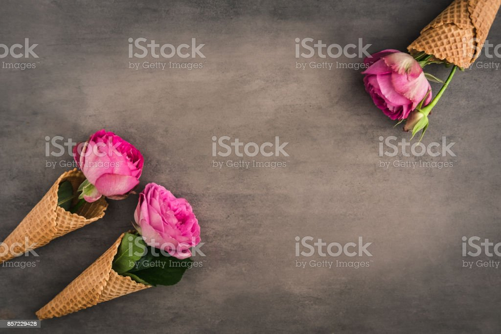 Rose flowers frame on dark background stock photo