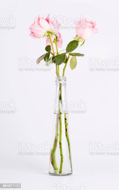 Rose flowers in a vase picture id864821122?b=1&k=6&m=864821122&s=612x612&h=wevwd2mkg1artm uhrzesynvdm8w71v1jjsummnydym=