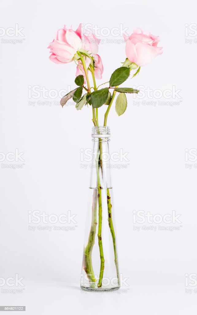 Rose flowers in a vase. stock photo