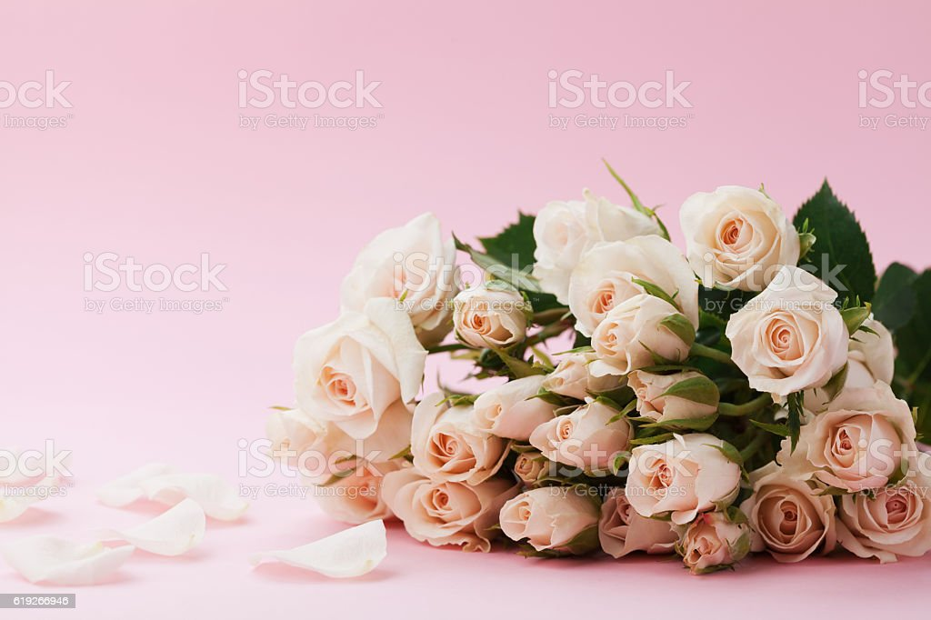 Rose flowers on pastel pink background. Beautiful greeting card. stock photo