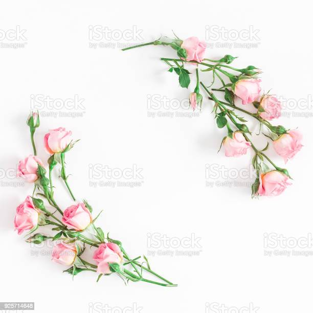 Rose flowers on white background flat lay top view square picture id925714648?b=1&k=6&m=925714648&s=612x612&h=g7babm3bd6eju29 gazioajd4nxioadux2v kjbomuy=