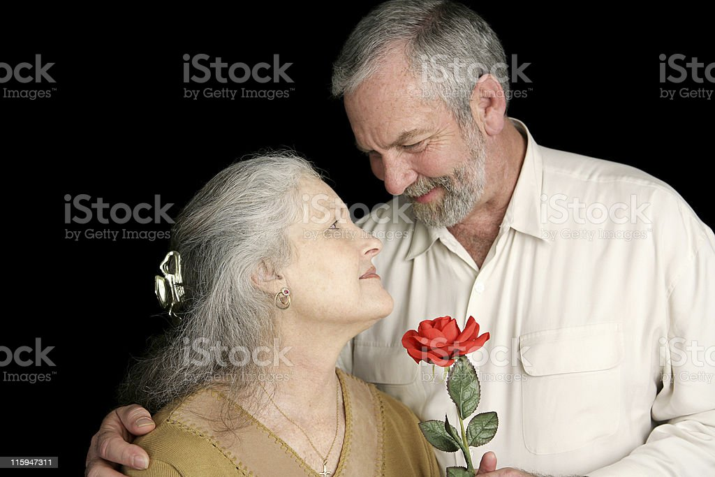 Rose for His Wife royalty-free stock photo