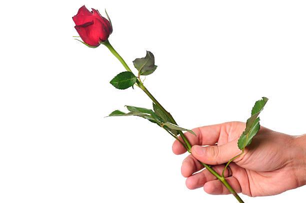 Rose for you picture id184945290?b=1&k=6&m=184945290&s=612x612&w=0&h=aca3x2r ep7h0 lwys7kxdaag iul0vzxdg6qfl yoc=