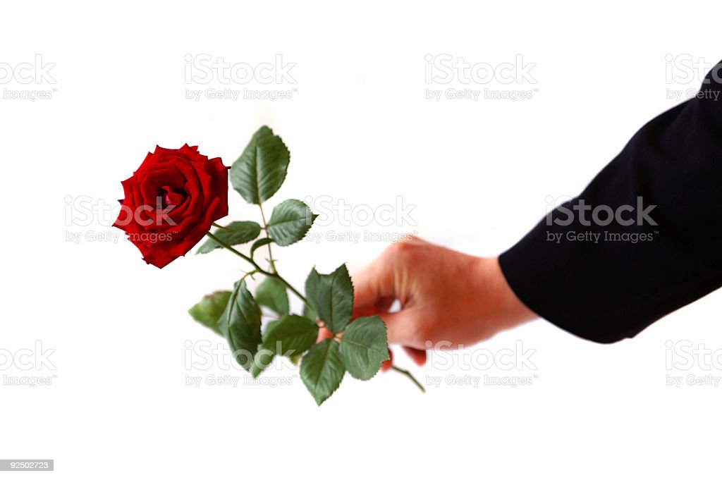 Rose for you royalty-free stock photo