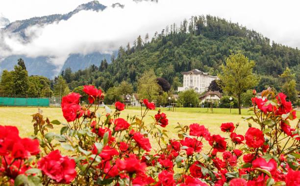 einen rosengarten auf freiem feld in interlaken mit blick auf hotel, haus und bergen als hintergrund von wolken bedeckt - hotel bern stock-fotos und bilder