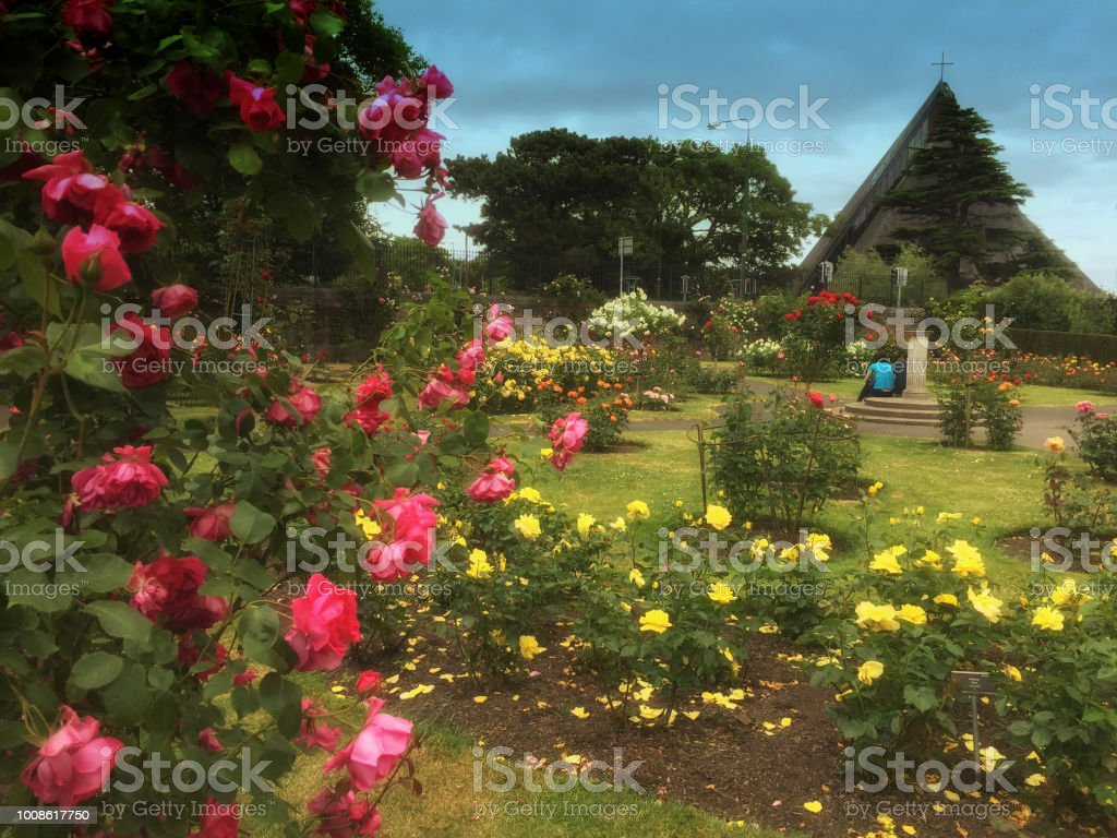 Rose Garden Stock Photo & More Pictures of Blossom | iStock