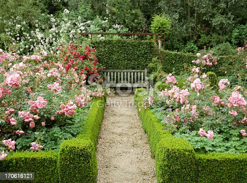Beautiful garden with rose shrubs,a trimmed buxus and hornbeam hedge.