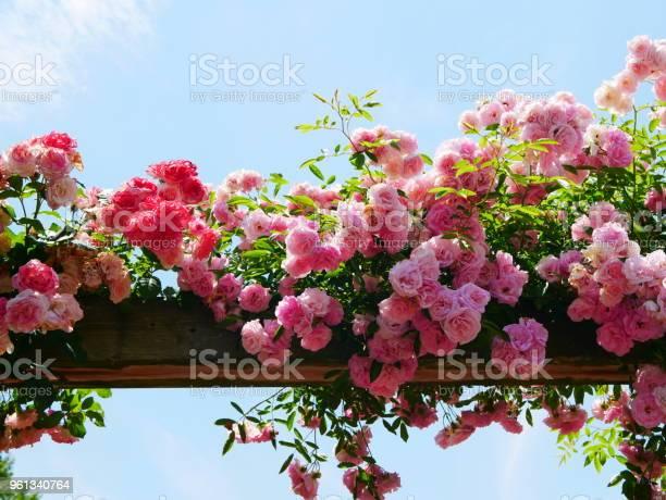 Rose garden picture id961340764?b=1&k=6&m=961340764&s=612x612&h=qz eztn ddyppzndatwscinyg0iidvmorm586jf6dsy=