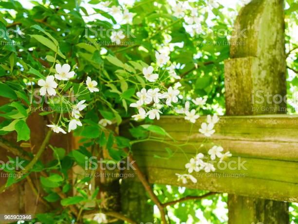 Rose Garden - Fotografias de stock e mais imagens de Ao Ar Livre