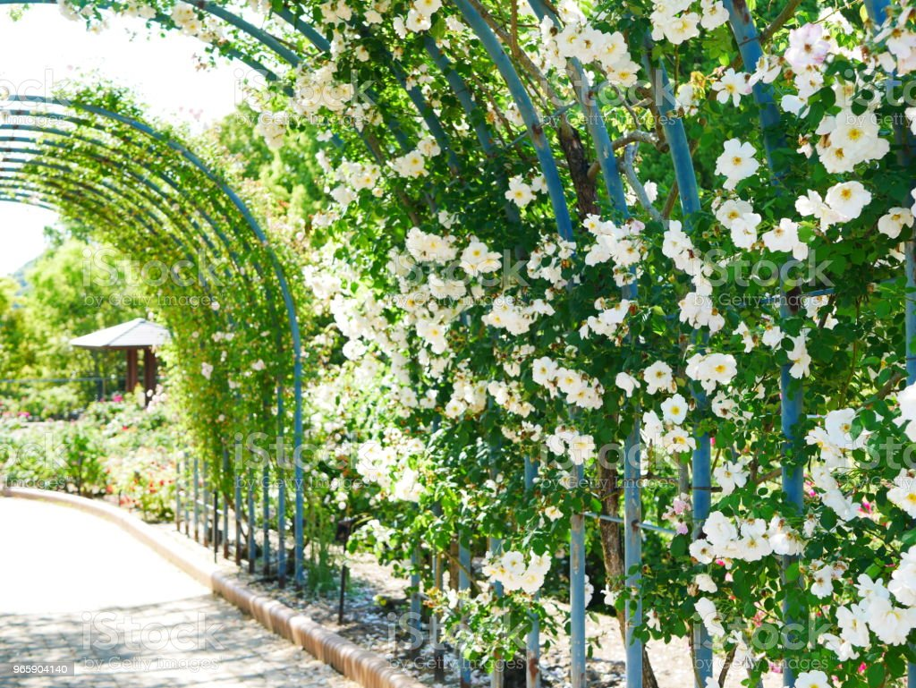 Rose garden - Royalty-free Arch - Architectural Feature Stock Photo