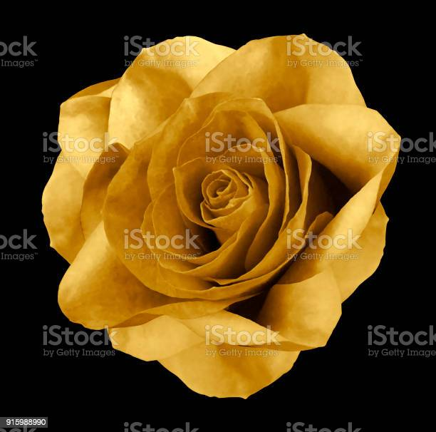 Rose gold flower on the black isolated background with clipping path picture id915988990?b=1&k=6&m=915988990&s=612x612&h=qo3degee8asushwg gdxf23hrai1u5j93fyjc9ymfnm=