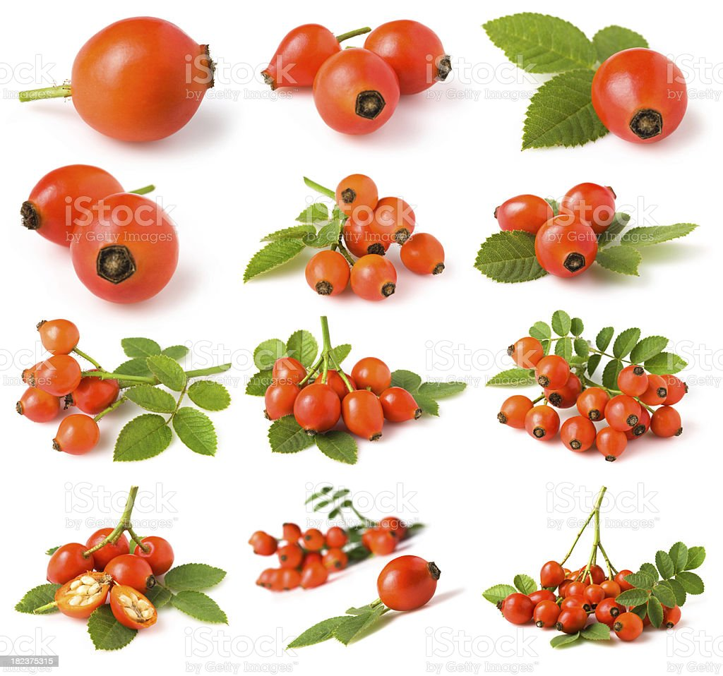rose hip-Kollektion – Foto