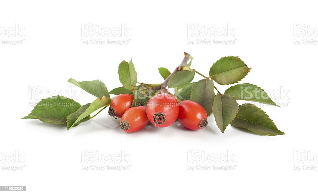 Rose hip isolated stock photo