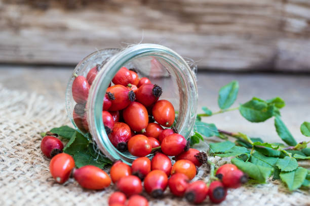 rose hip fresh red rose hip in a glass dog rose stock pictures, royalty-free photos & images