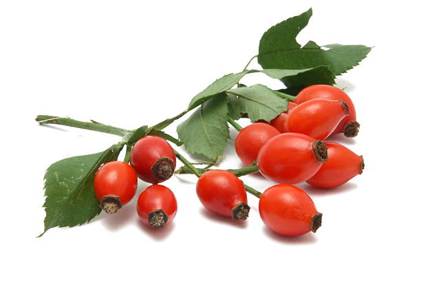Rose Hip (isolated) stock photo