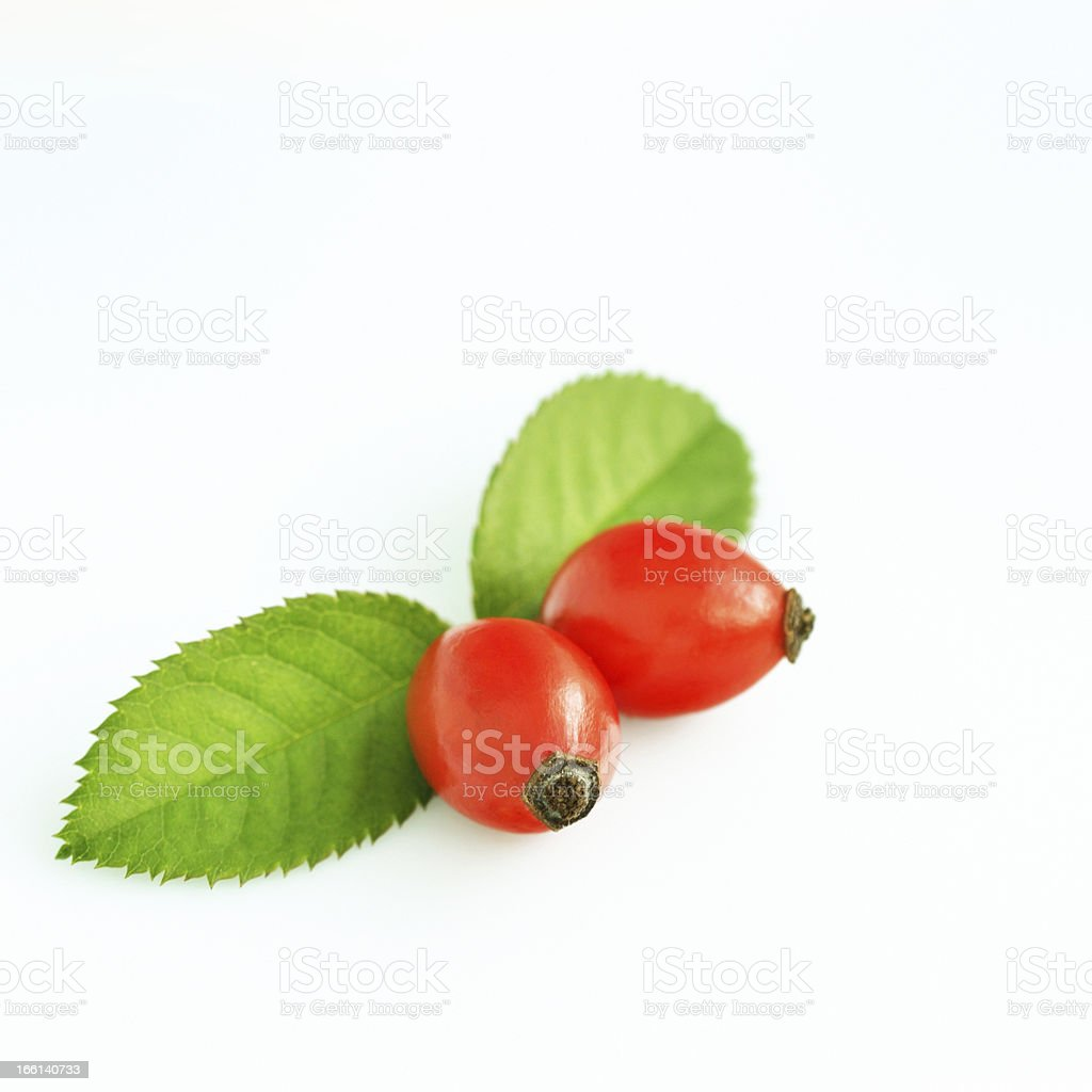Rose hips isolated stock photo