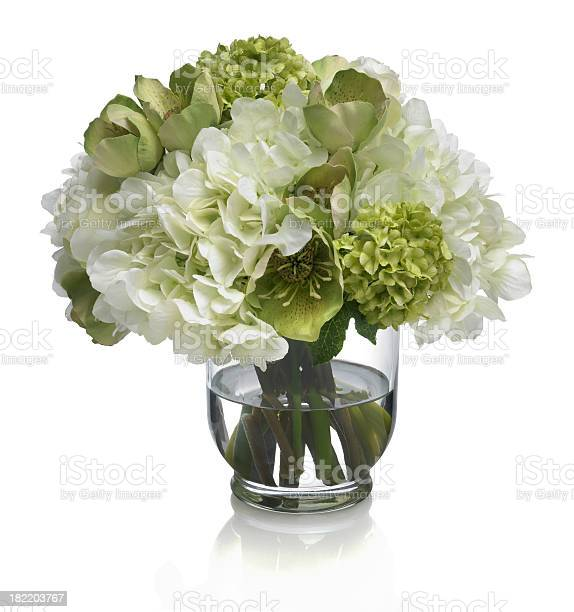Rose hydrangea and hellebore bouquet on white background picture id182203767?b=1&k=6&m=182203767&s=612x612&h= ocyid4tuw tujh 0vm4zpfymmghmizzptgqf36rjlg=
