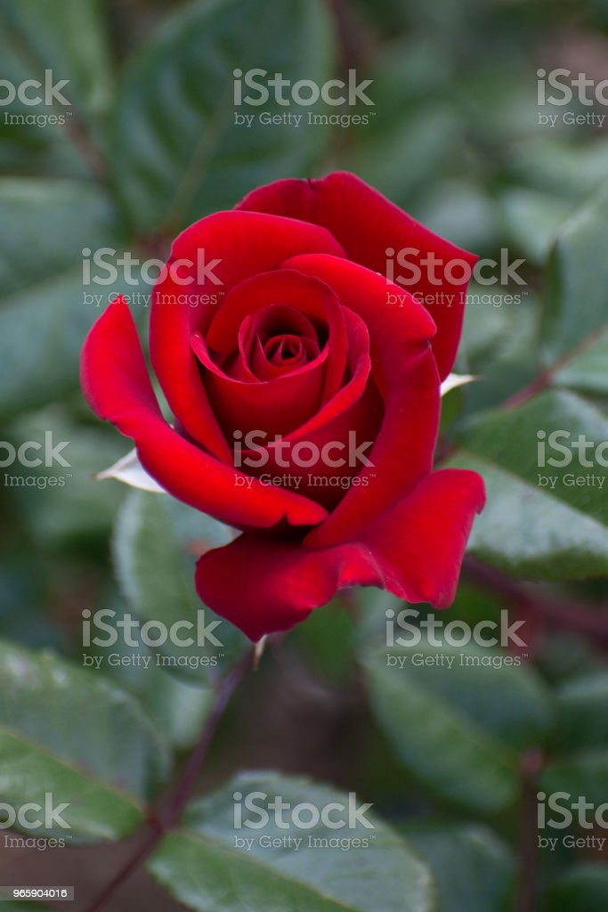 Steeg in bloei in de heuvels van Malibu, California - Royalty-free Aanraken Stockfoto