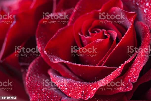 Rose in macro picture id864154612?b=1&k=6&m=864154612&s=612x612&h=uw1e btzsajuj6jt7v4l xdk7kq1mnfjvxafs16i380=