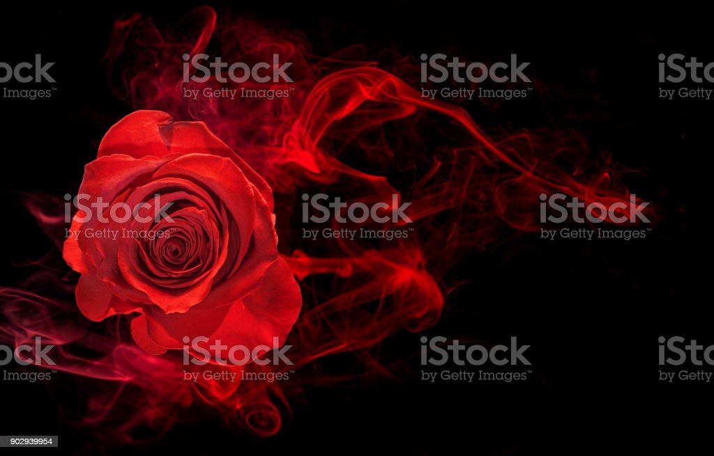 rose in smoke swirl on black royalty-free stock photo