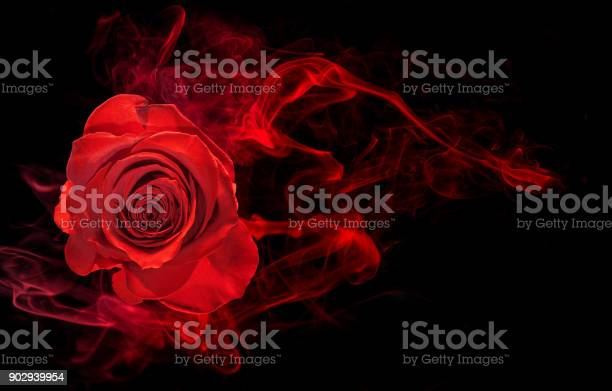 Rose in smoke swirl on black picture id902939954?b=1&k=6&m=902939954&s=612x612&h=cpqwomckljtc0bd06bgkjd3fsdqquhrtqed9 2q1hku=