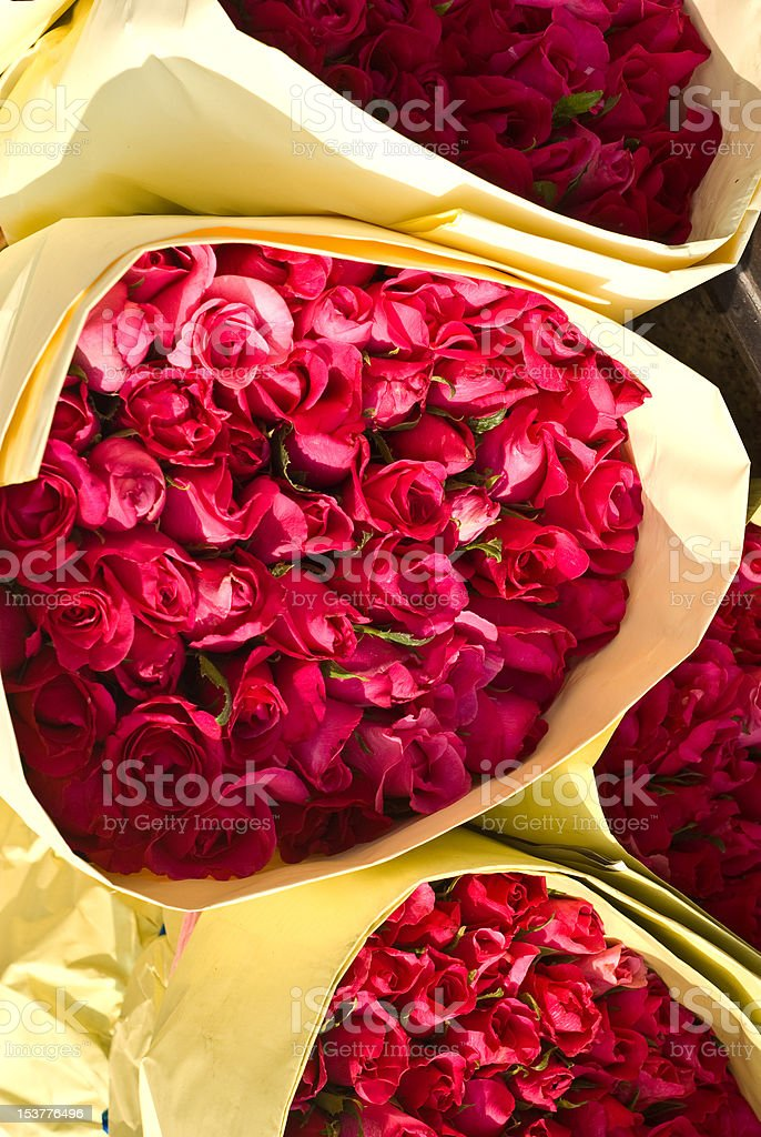 Rose in the pack royalty-free stock photo