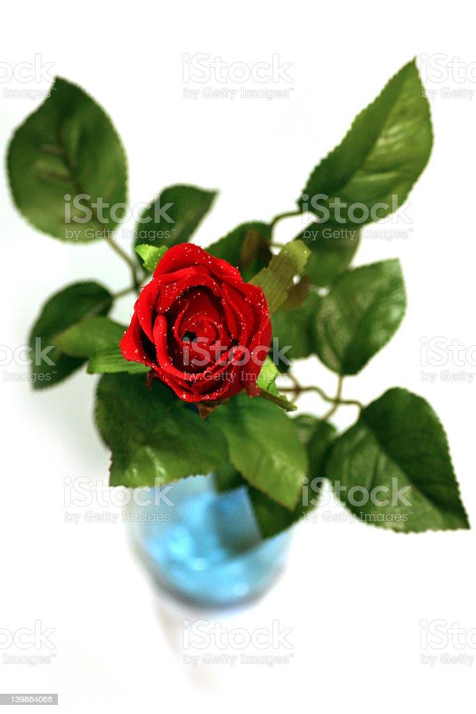 Rose in vase royalty-free stock photo